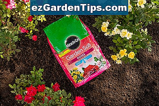Miracle Gro & Roses