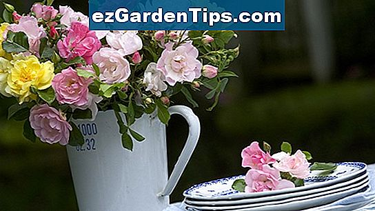 Romancing Roses in Containers