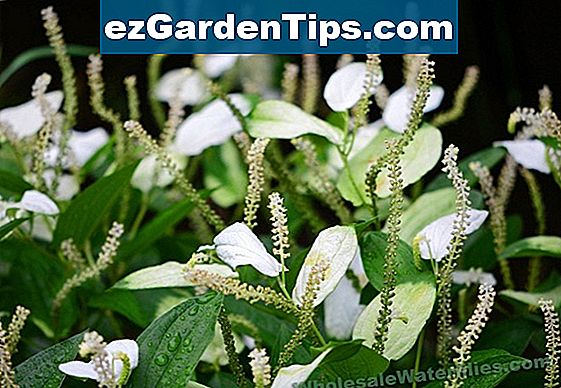 Shade Tolerant Swamp Plants