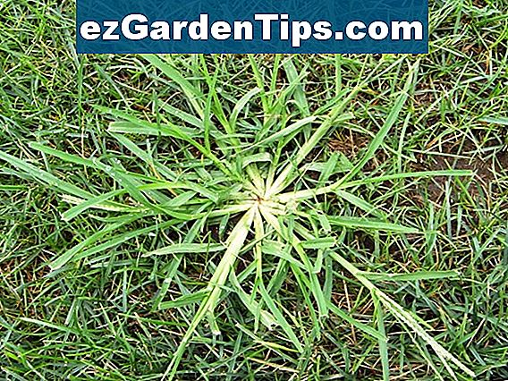Crabgrass Vs. Johnsongrass
