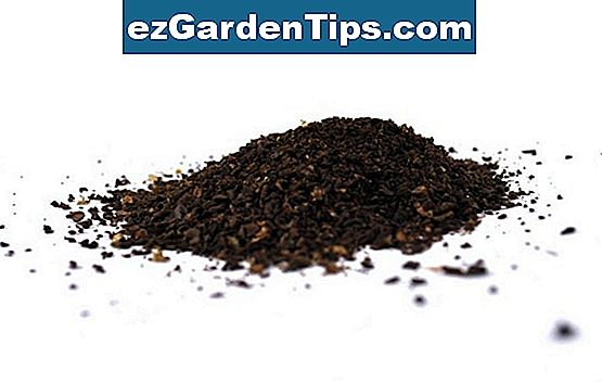 Azalea Care & Coffee Grounds